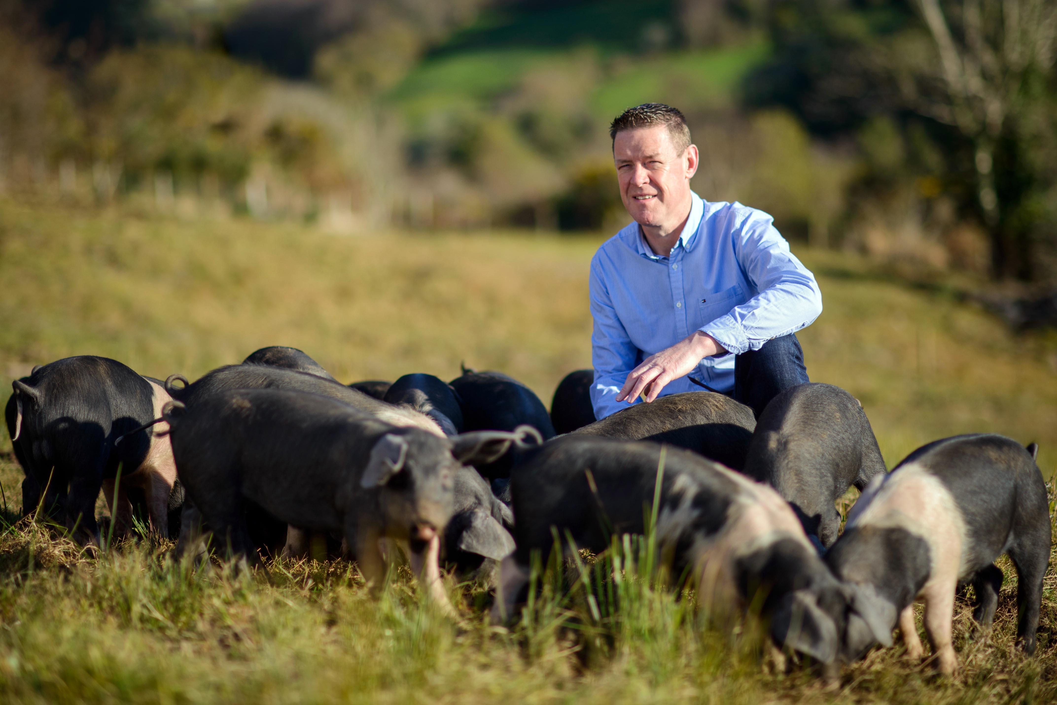 no 35 pigs